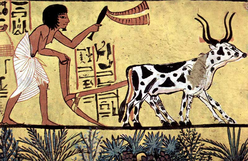 painting showing farming in ancient Egypt